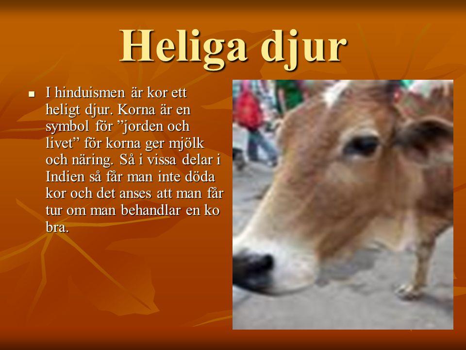 Heliga djur IIII hinduismen är kor ett heligt djur.