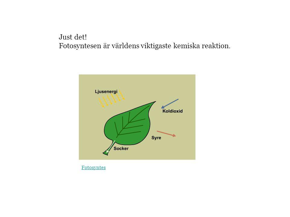 Just det! Fotosyntesen är världens viktigaste kemiska reaktion. Fotosyntes