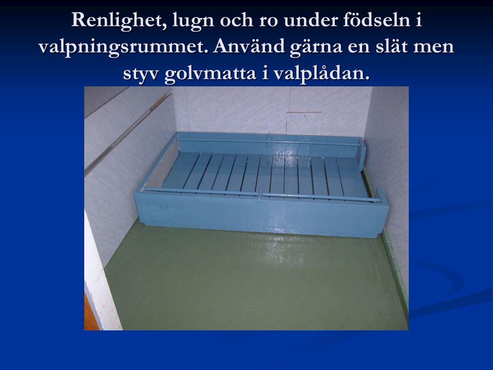 Renlighet, lugn och ro under födseln i valpningsrummet. Använd gärna en slät men styv golvmatta i valplådan.