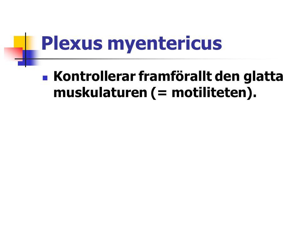 Plexus myentericus  Kontrollerar framförallt den glatta muskulaturen (= motiliteten).