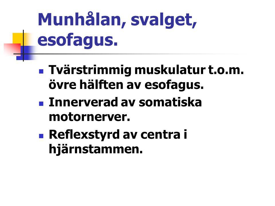 Munhålan, svalget, esofagus. Tvärstrimmig muskulatur t.o.m.
