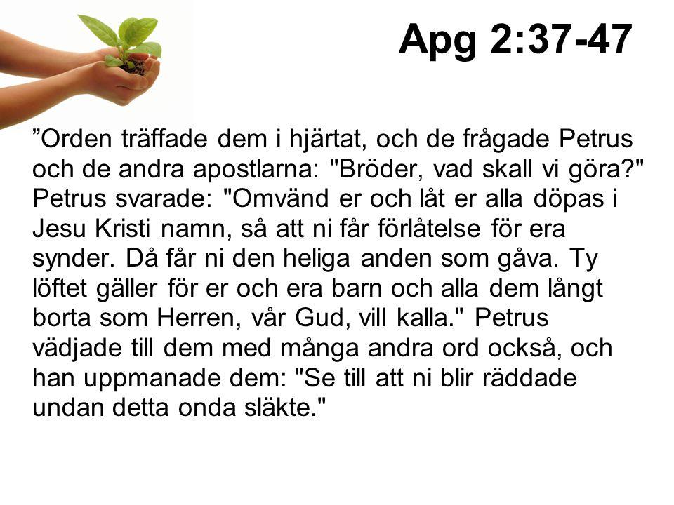Apg 2:37-47 Orden träffade dem i hjärtat, och de frågade Petrus och de andra apostlarna: Bröder, vad skall vi göra? Petrus svarade: Omvänd er och låt er alla döpas i Jesu Kristi namn, så att ni får förlåtelse för era synder.