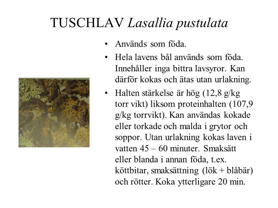 TUSCHLAV Lasallia pustulata •Används som föda.•Hela lavens bål används som föda.