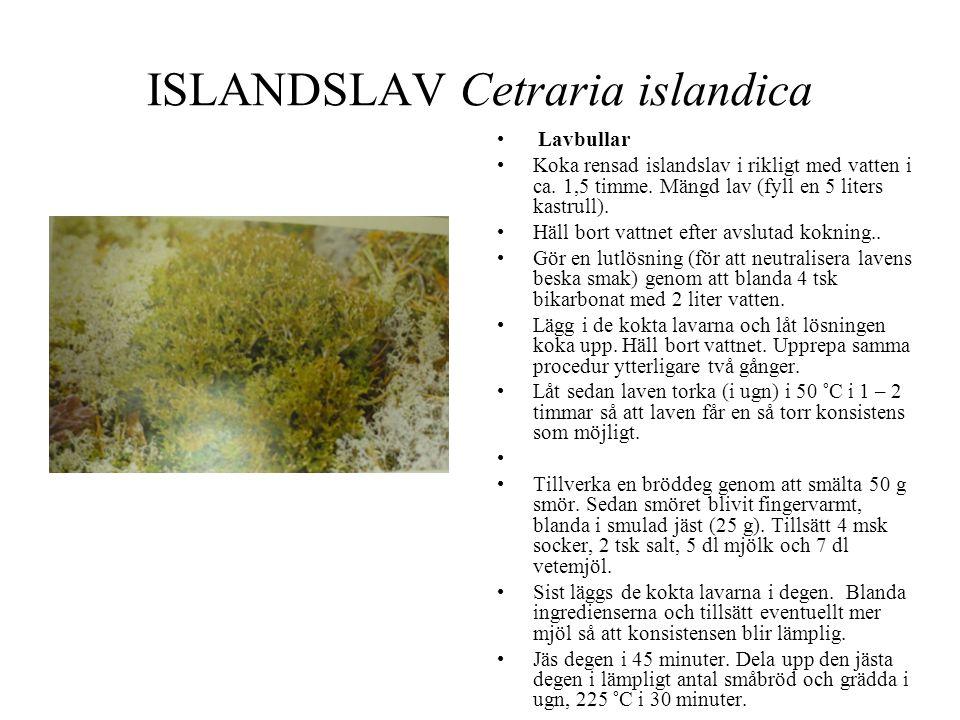 ISLANDSLAV Cetraria islandica • Lavbullar •Koka rensad islandslav i rikligt med vatten i ca. 1,5 timme. Mängd lav (fyll en 5 liters kastrull). •Häll b