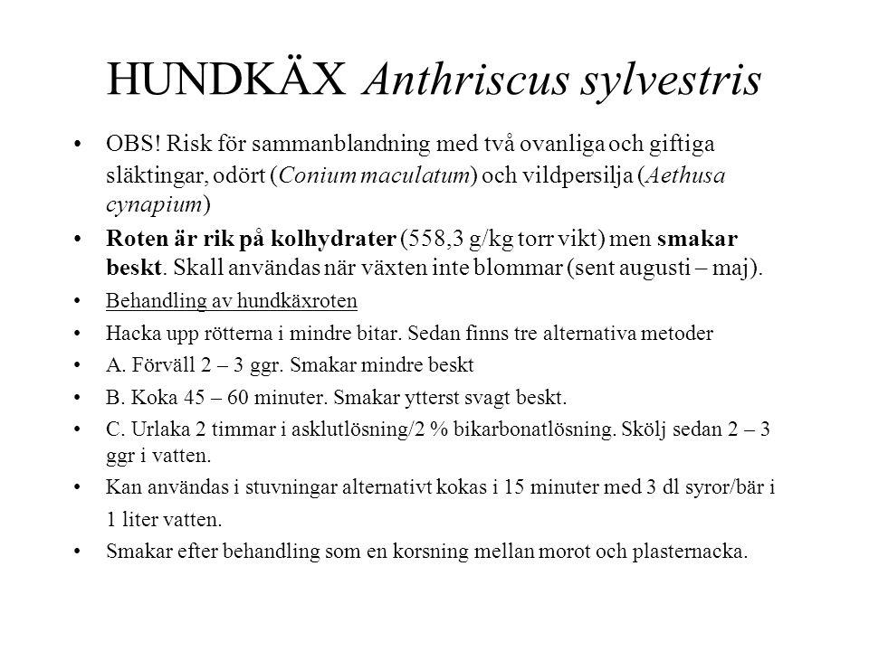 •OBS! Risk för sammanblandning med två ovanliga och giftiga släktingar, odört (Conium maculatum) och vildpersilja (Aethusa cynapium) •Roten är rik på