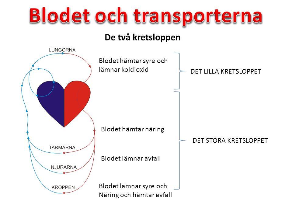 De två kretsloppen DET LILLA KRETSLOPPET DET STORA KRETSLOPPET Blodet hämtar syre och lämnar koldioxid Blodet hämtar näring Blodet lämnar avfall Blode