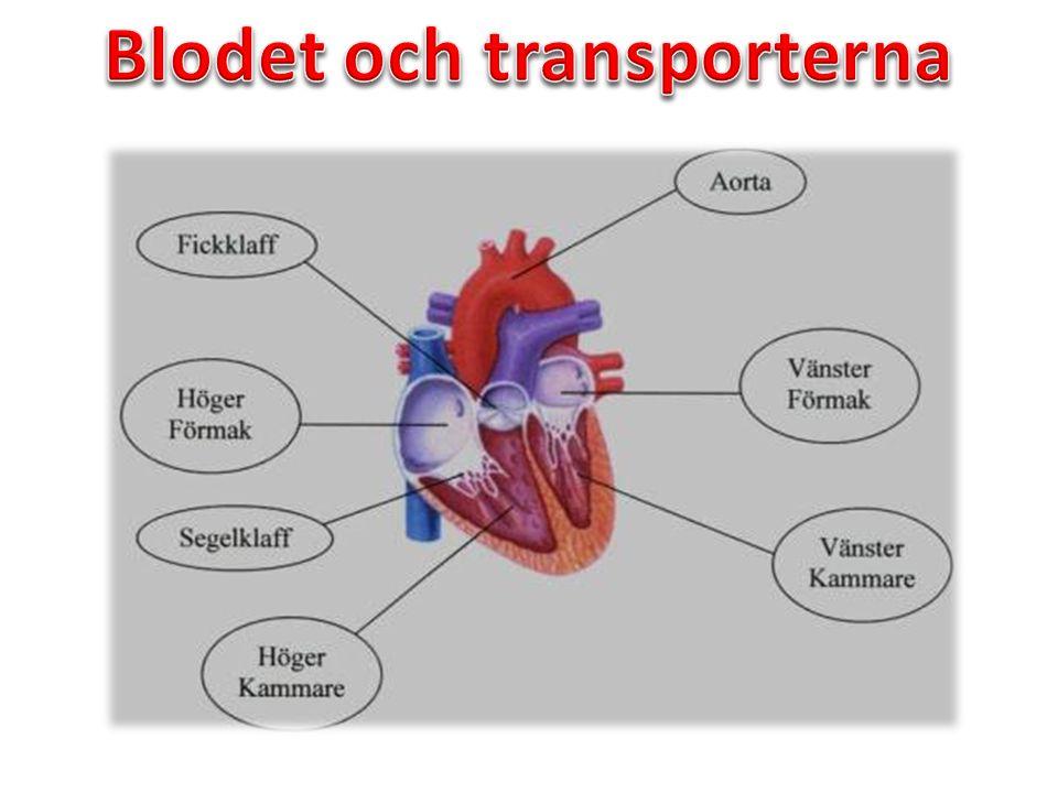 Puls: Känns när hjärtat dras samman och ett tryckvåg uppstår.