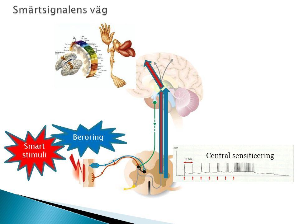 45 Smärt stimuli Central sensiticering Beröring