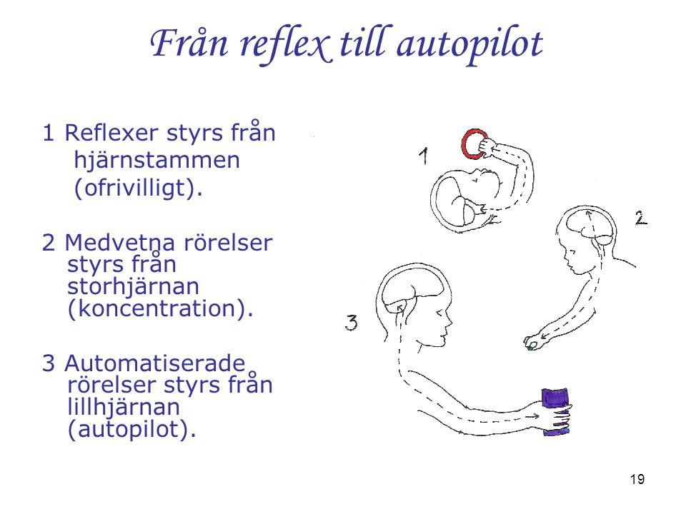 19 Från reflex till autopilot 1 Reflexer styrs från hjärnstammen (ofrivilligt). 2 Medvetna rörelser styrs från storhjärnan (koncentration). 3 Automati