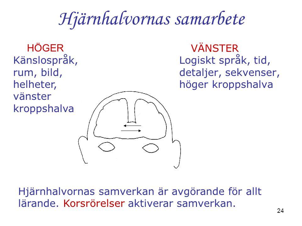 24 Hjärnhalvornas samarbete VÄNSTER Logiskt språk, tid, detaljer, sekvenser, höger kroppshalva HÖGER Känslospråk, rum, bild, helheter, vänster kroppsh
