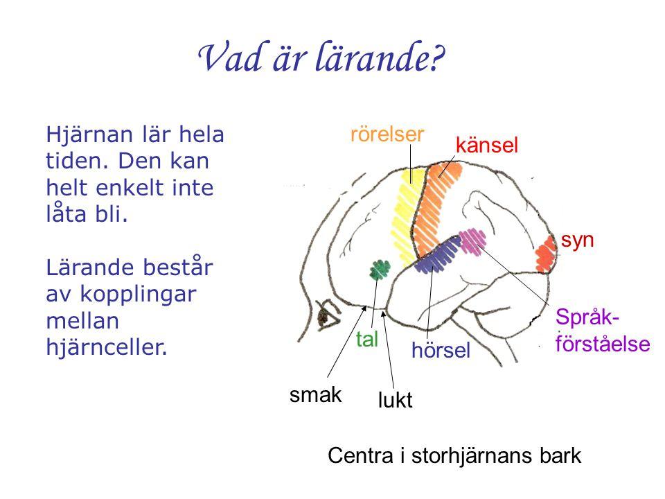 Vad är lärande? Centra i storhjärnans bark syn känsel rörelser tal hörsel Språk- förståelse smak lukt Hjärnan lär hela tiden. Den kan helt enkelt inte