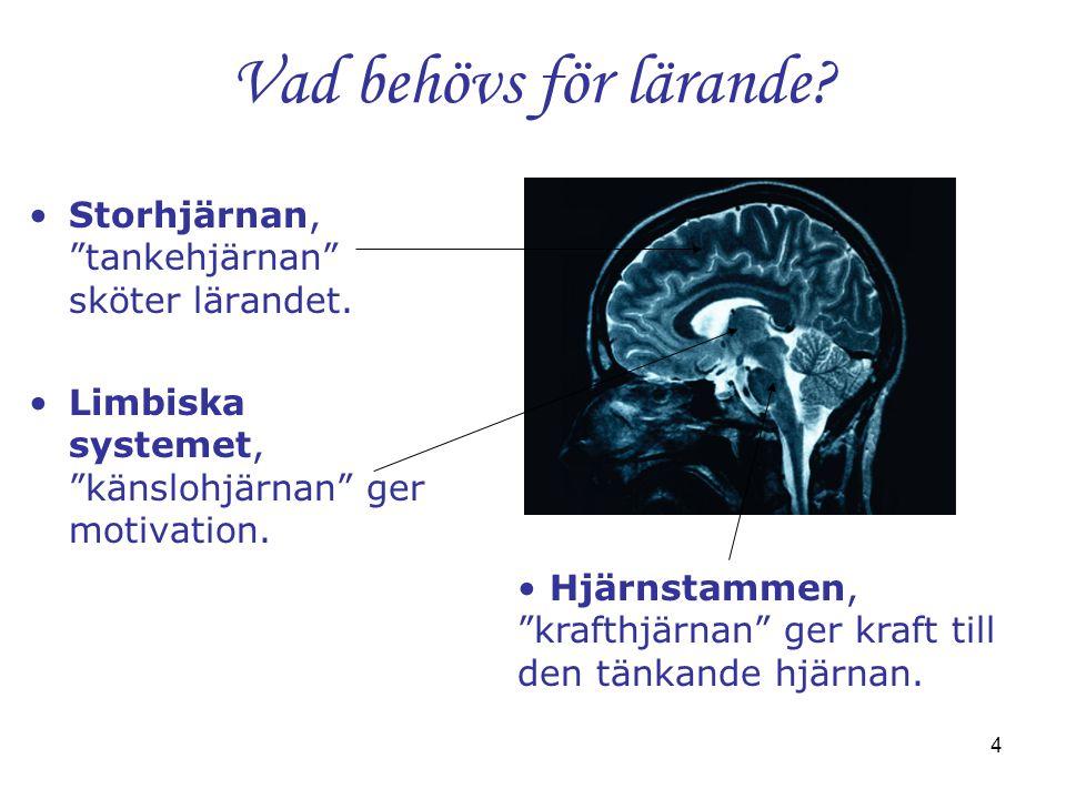 """4 Vad behövs för lärande? •Storhjärnan, """"tankehjärnan"""" sköter lärandet. •Limbiska systemet, """"känslohjärnan"""" ger motivation. • Hjärnstammen, """"krafthjär"""