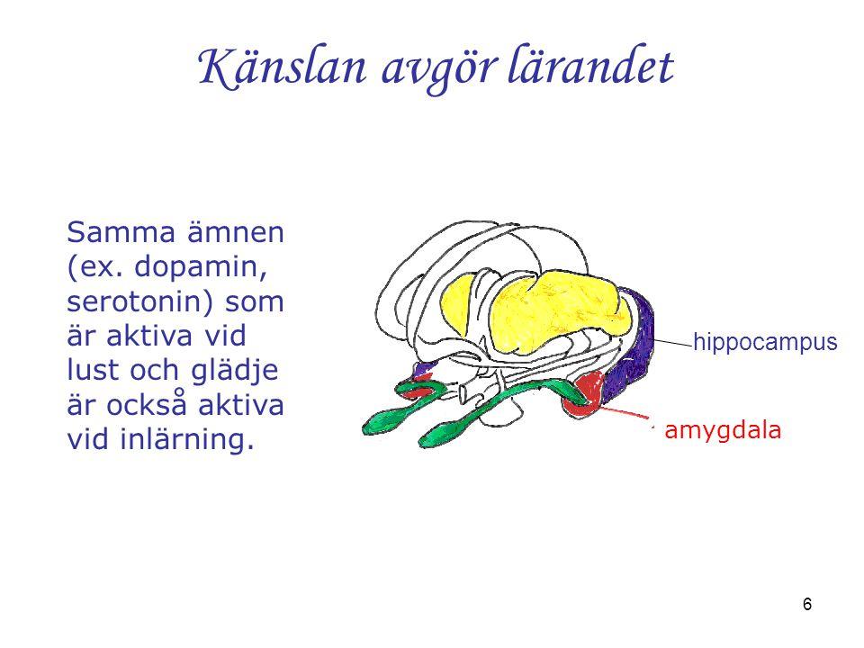 6 Känslan avgör lärandet hippocampus Samma ämnen (ex. dopamin, serotonin) som är aktiva vid lust och glädje är också aktiva vid inlärning. amygdala