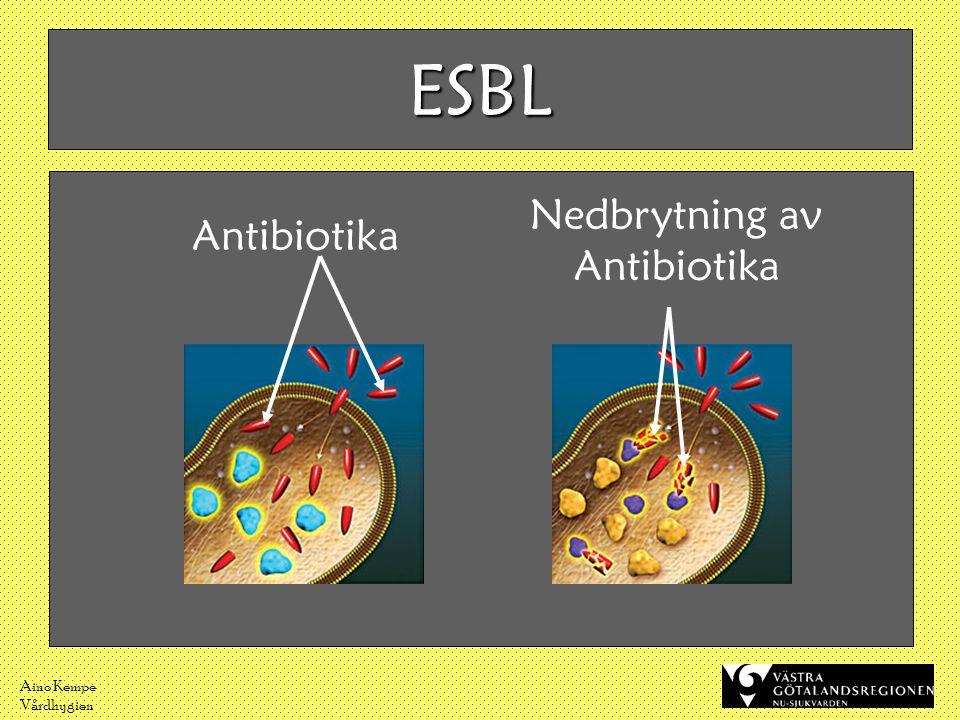 Aino Kempe Vårdhygien Antibiotika ESBL Nedbrytning av Antibiotika