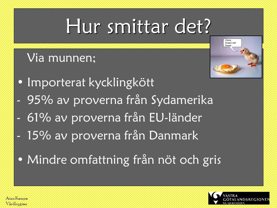 Aino Kempe Vårdhygien Hur smittar det? Via munnen; •Importerat kycklingkött -95% av proverna från Sydamerika -61% av proverna från EU-länder -15% av p