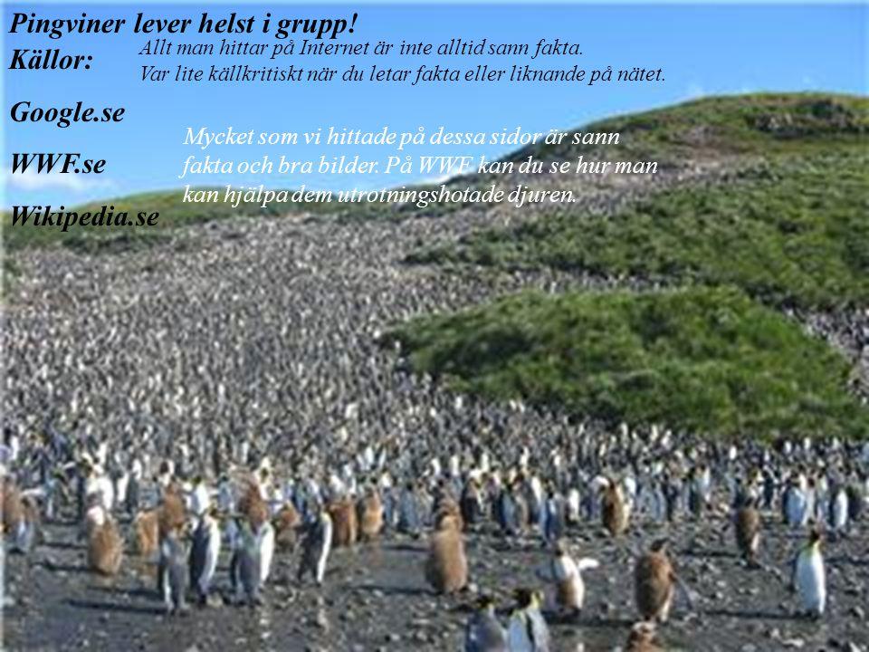 Jämförelser & reflektioner  Både pingvinen och pandan har svartvita kroppar för att kamouflera sig och smälta in i omgivningen. Vi tror att det är så