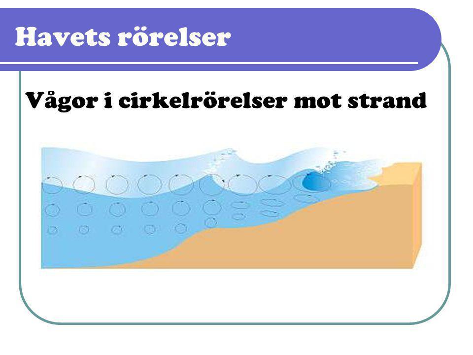 Havets rörelser Vågor i cirkelrörelser mot strand