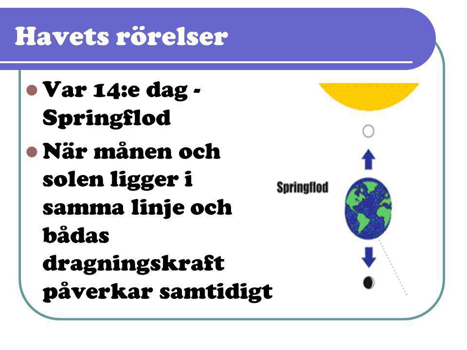 Havets rörelser  Var 14:e dag - Springflod  När månen och solen ligger i samma linje och bådas dragningskraft påverkar samtidigt