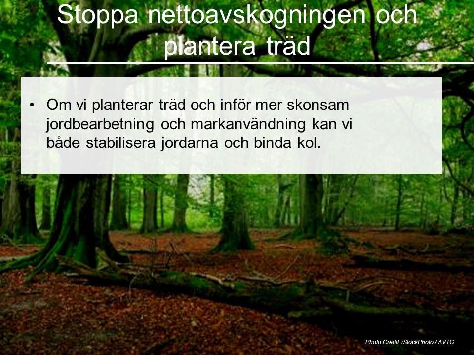 Stoppa nettoavskogningen och plantera träd Photo Credit: iStockPhoto / AVTG •Om vi planterar träd och inför mer skonsam jordbearbetning och markanvändning kan vi både stabilisera jordarna och binda kol.