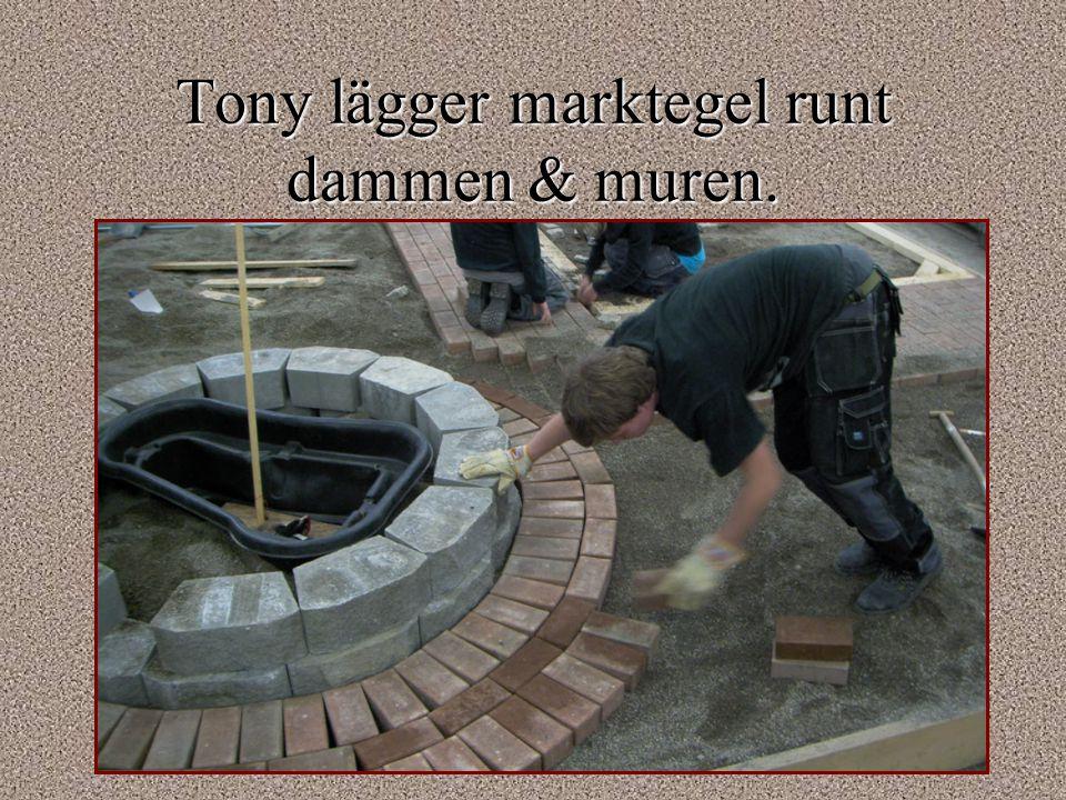 Tony lägger marktegel runt dammen & muren.