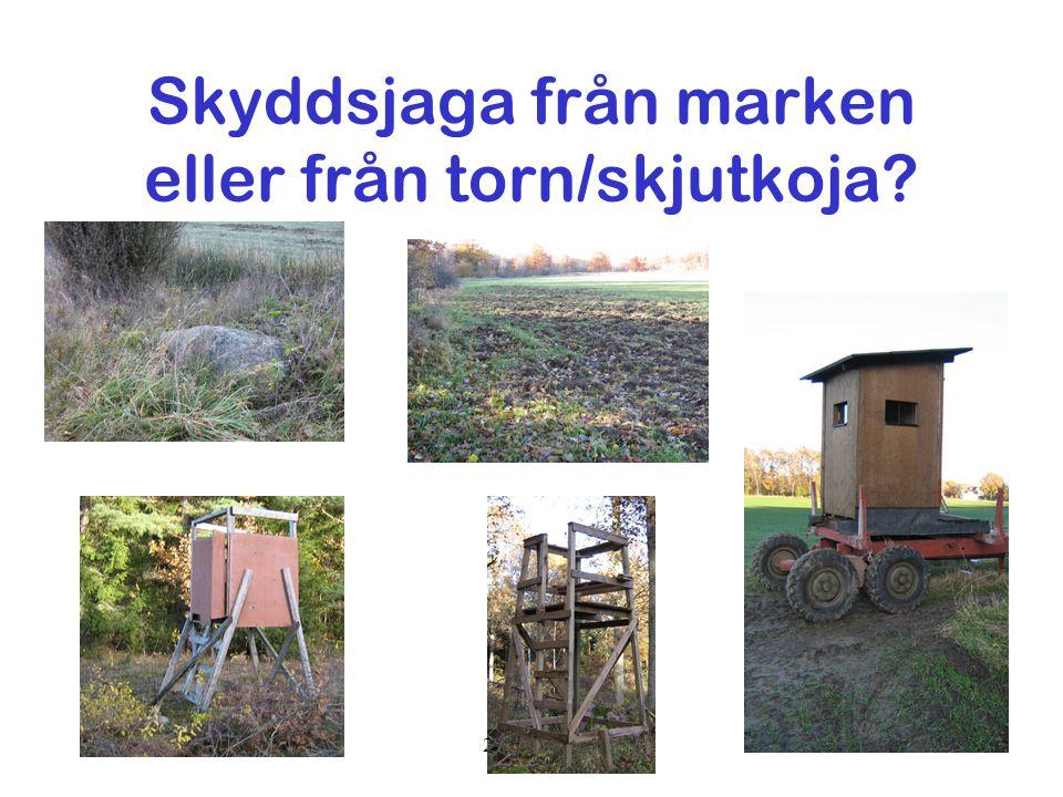 Folke Fagerlund2007-11-0534 Skyddsjaga från marken eller från torn/skjutkoja?