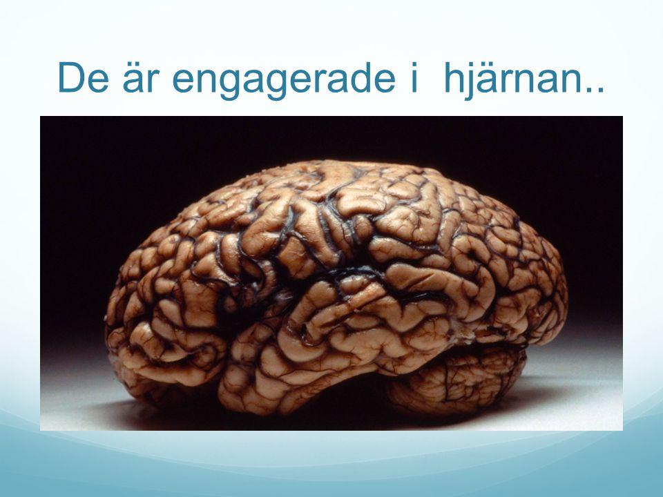 De är engagerade i hjärnan..