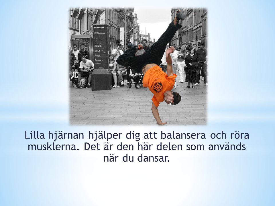 Lilla hjärnan hjälper dig att balansera och röra musklerna. Det är den här delen som används när du dansar.