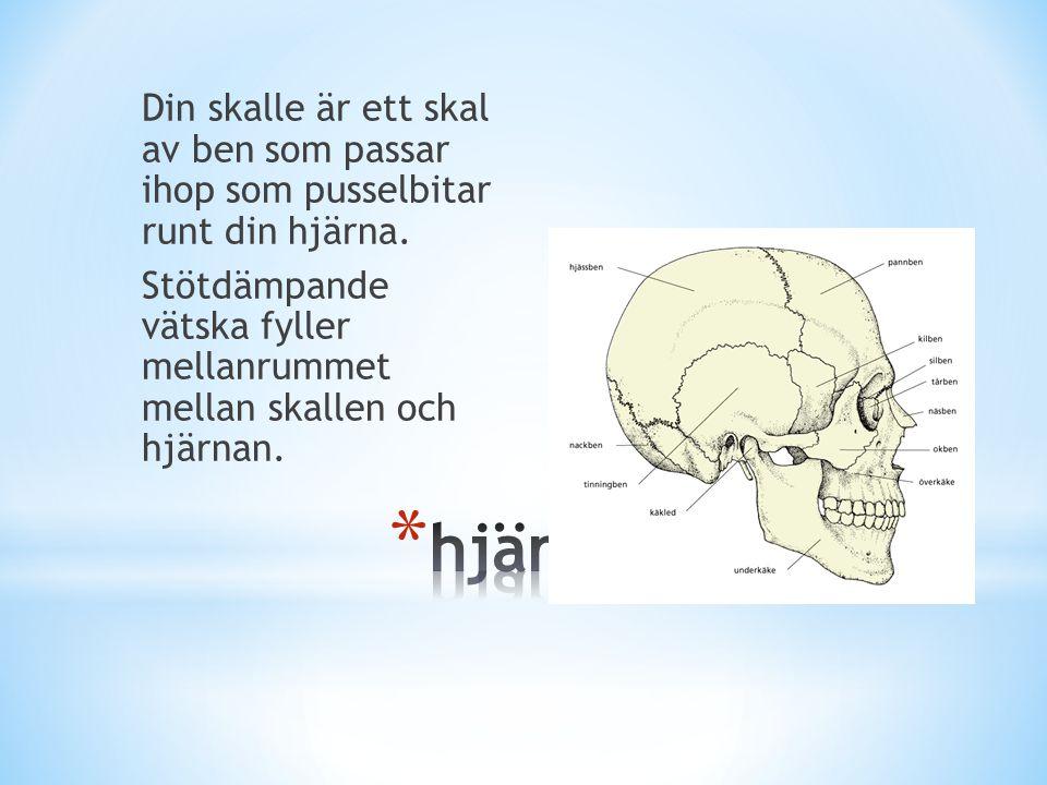 Din skalle är ett skal av ben som passar ihop som pusselbitar runt din hjärna. Stötdämpande vätska fyller mellanrummet mellan skallen och hjärnan.