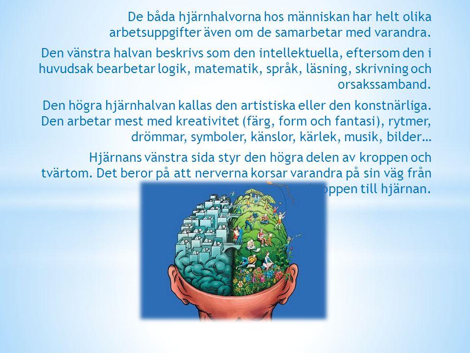 De båda hjärnhalvorna hos människan har helt olika arbetsuppgifter även om de samarbetar med varandra. Den vänstra halvan beskrivs som den intellektue