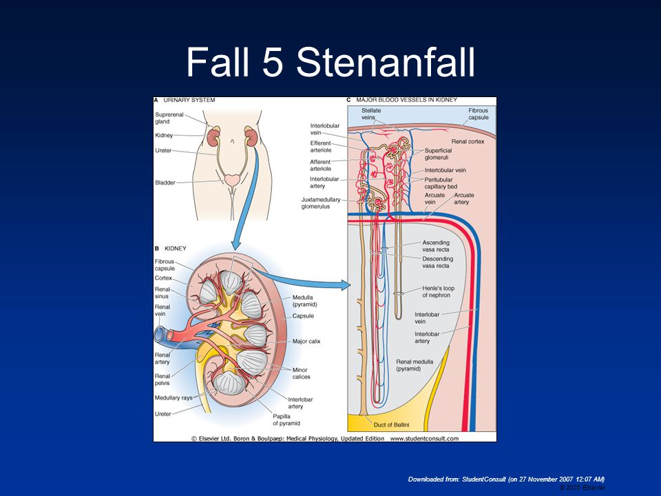 Downloaded from: StudentConsult (on 27 November 2007 12:07 AM) © 2005 Elsevier Fall 5 Stenanfall