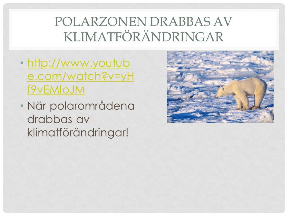 POLARZONEN DRABBAS AV KLIMATFÖRÄNDRINGAR • http://www.youtub e.com/watch?v=yH f9vEMIoJM http://www.youtub e.com/watch?v=yH f9vEMIoJM • När polarområde