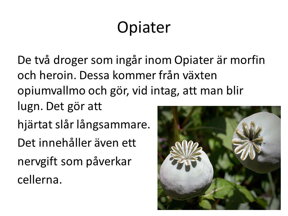 Opiater De två droger som ingår inom Opiater är morfin och heroin. Dessa kommer från växten opiumvallmo och gör, vid intag, att man blir lugn. Det gör