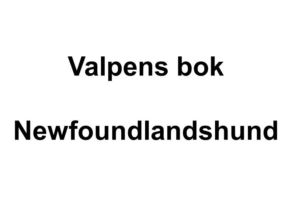 Valpens bok Newfoundlandshund