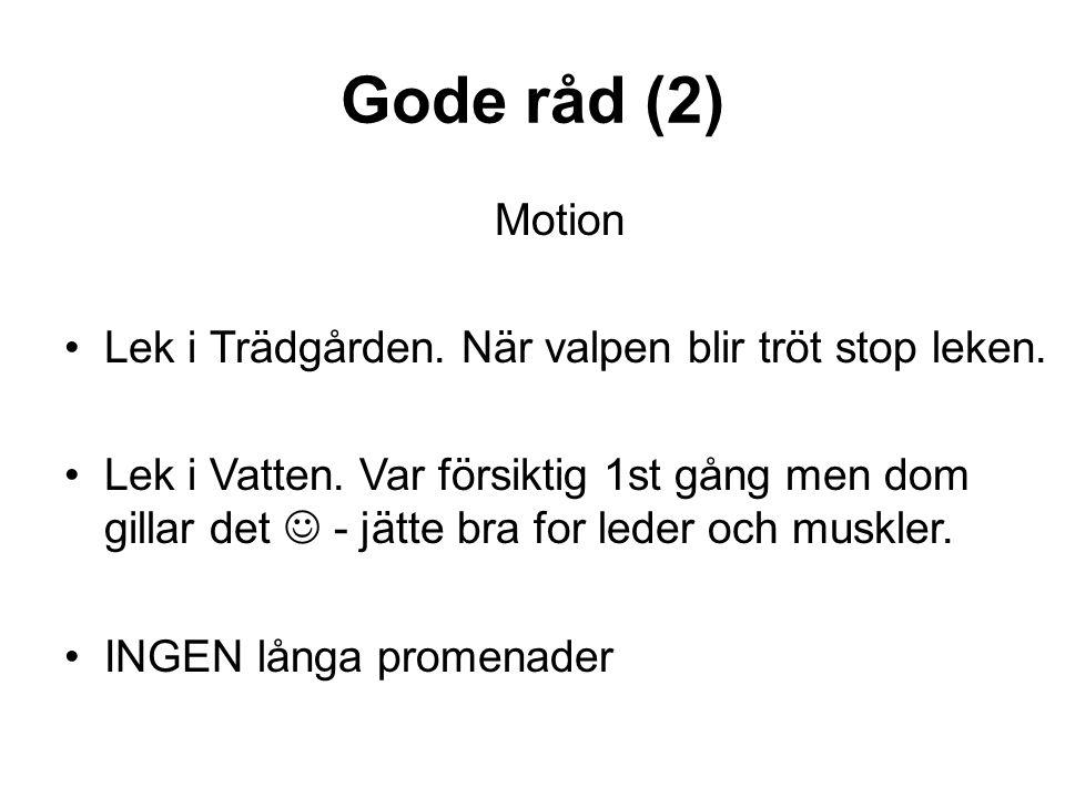 Gode råd (2) Motion •Lek i Trädgården. När valpen blir tröt stop leken. •Lek i Vatten. Var försiktig 1st gång men dom gillar det  - jätte bra for led