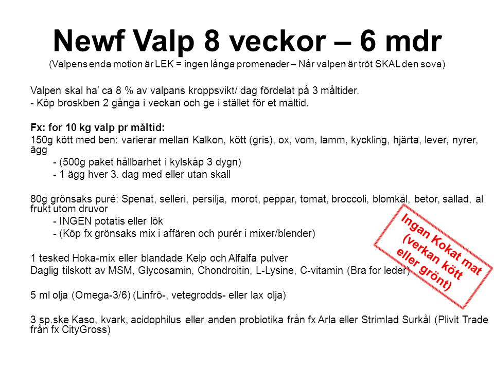 Newf Valp 8 veckor – 6 mdr (Valpens enda motion är LEK = ingen långa promenader – Når valpen är tröt SKAL den sova) Valpen skal ha' ca 8 % av valpans