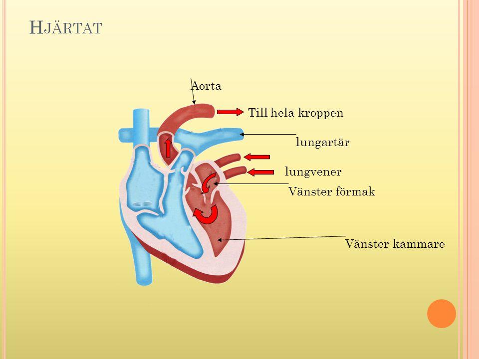 H JÄRTAT Vänster kammare Vänster förmak lungvener Till hela kroppen Aorta lungartär