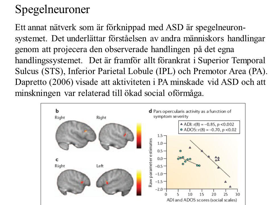 Spegelneuroner Ett annat nätverk som är förknippad med ASD är spegelneuron- systemet. Det underlättar förståelsen av andra människors handlingar genom