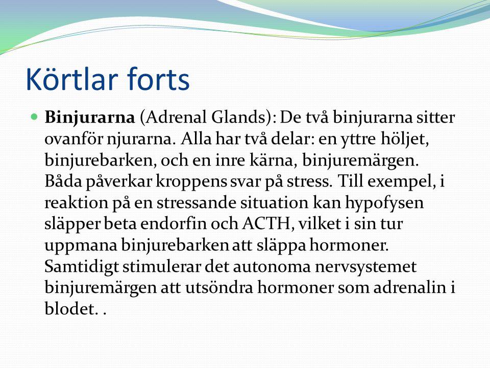 Körtlar forts  Binjurarna (Adrenal Glands): De två binjurarna sitter ovanför njurarna. Alla har två delar: en yttre höljet, binjurebarken, och en inr