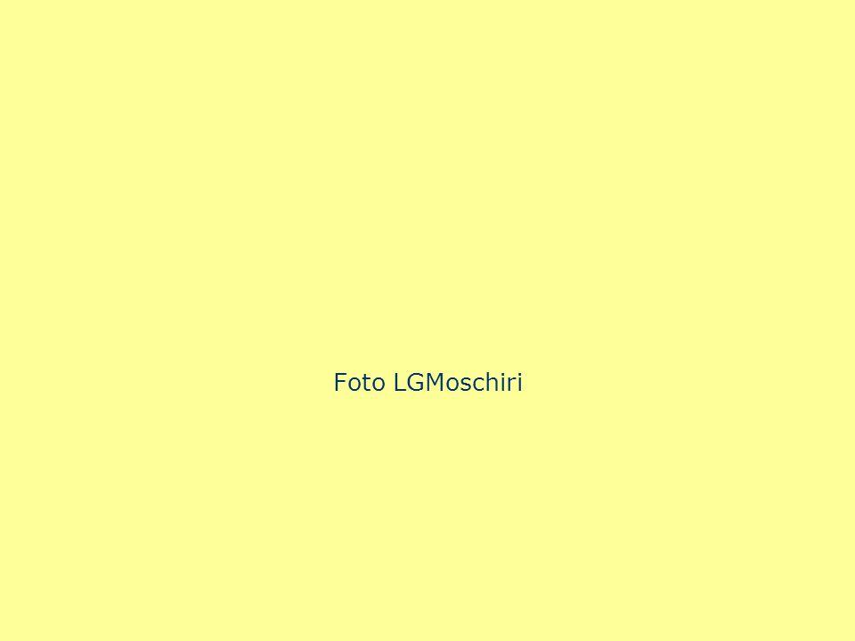 Foto LGMoschiri