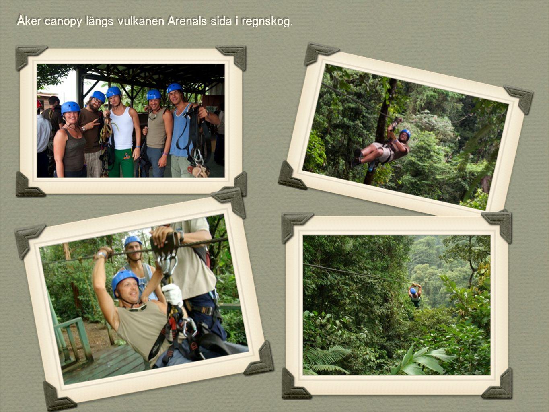 Åker canopy längs vulkanen Arenals sida i regnskog.