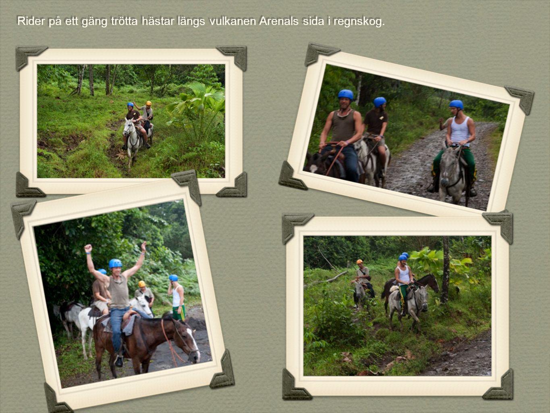 Rider på ett gäng trötta hästar längs vulkanen Arenals sida i regnskog.