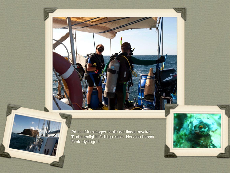 På Isla Murcielagos skulle det finnas mycket Tjurhaj enligt tillförlitliga källor.