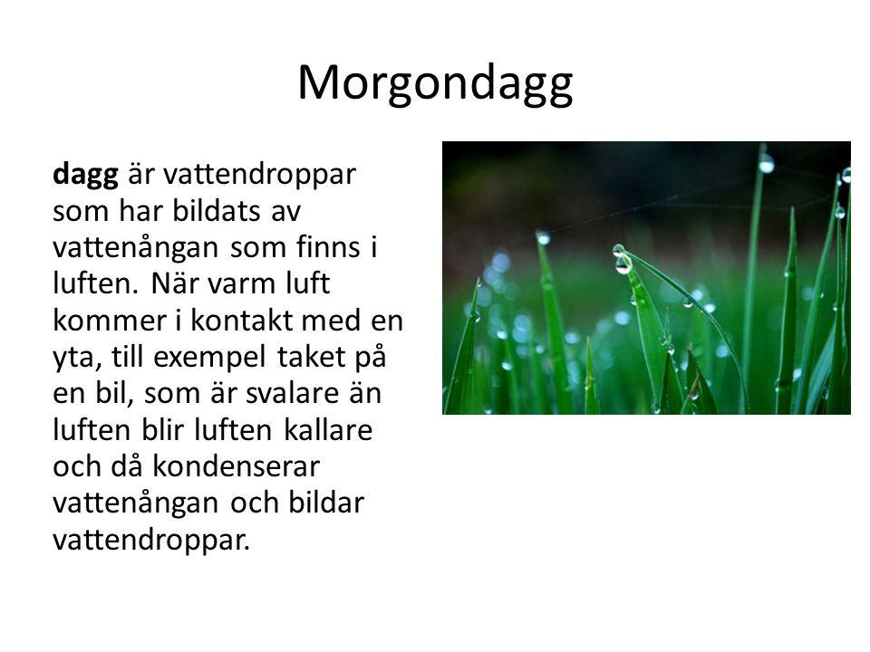 Morgondagg dagg är vattendroppar som har bildats av vattenångan som finns i luften. När varm luft kommer i kontakt med en yta, till exempel taket på e
