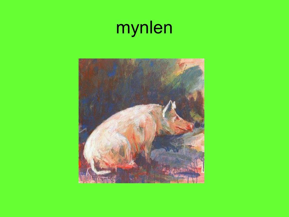 mynlen