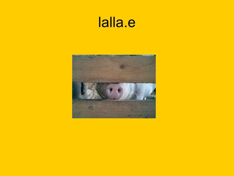 Elmis