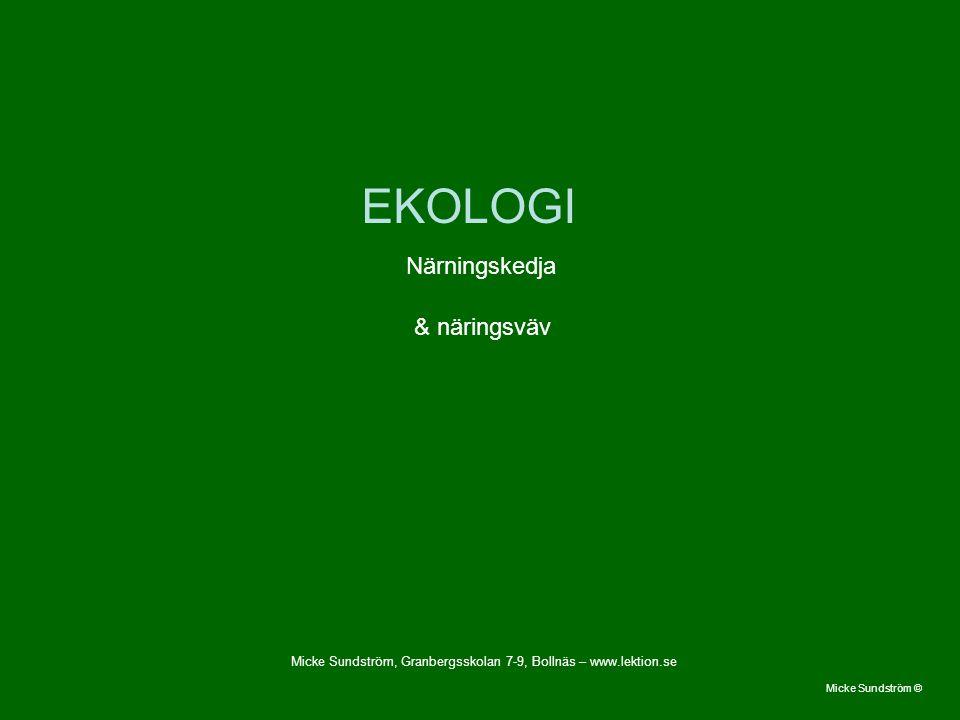 EKOLOGI Närningskedja & näringsväv Micke Sundström © Micke Sundström, Granbergsskolan 7-9, Bollnäs – www.lektion.se
