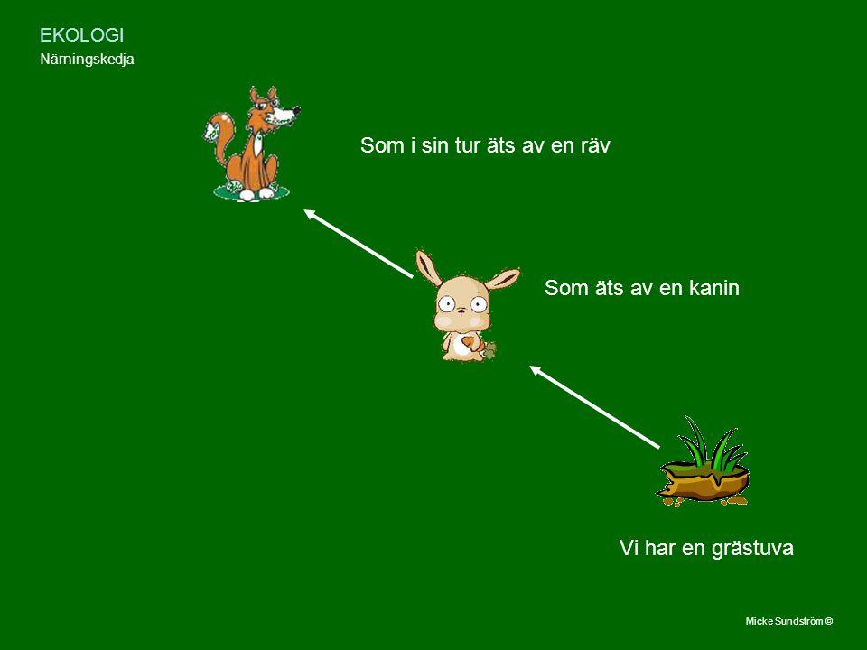 EKOLOGI Närningskedja Vi har en grästuva Som äts av en kanin Som i sin tur äts av en räv Micke Sundström ©