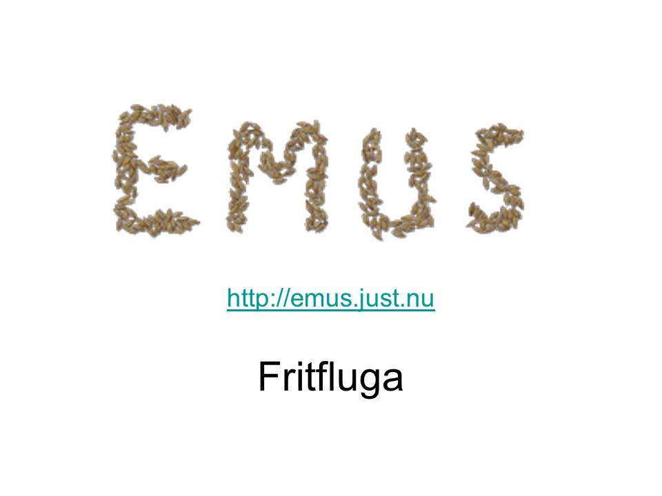 http://emus.just.nu Fritfluga