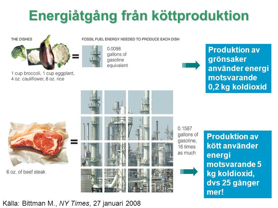 10 IPCC Energiåtgång från köttproduktion Produktion av grönsaker använder energi motsvarande 0,2 kg koldioxid Produktion av kött använder energi motsv