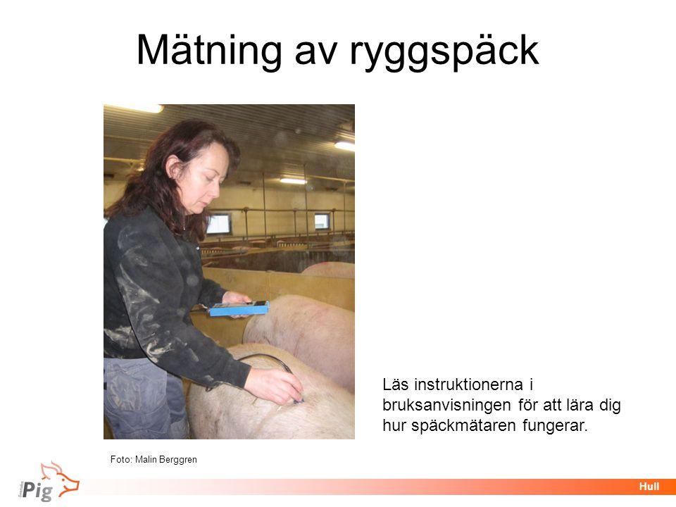 Föreläsningsrubrik / temaHull Mätning av ryggspäck Läs instruktionerna i bruksanvisningen för att lära dig hur späckmätaren fungerar. Foto: Malin Berg